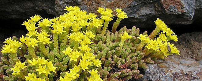 Rostliny fungující jako barometr a přírodní hodiny