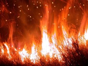 Vypalování lesů