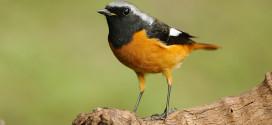 Ptačí hodiny aneb určování hodin podle intenzity rozednívání.